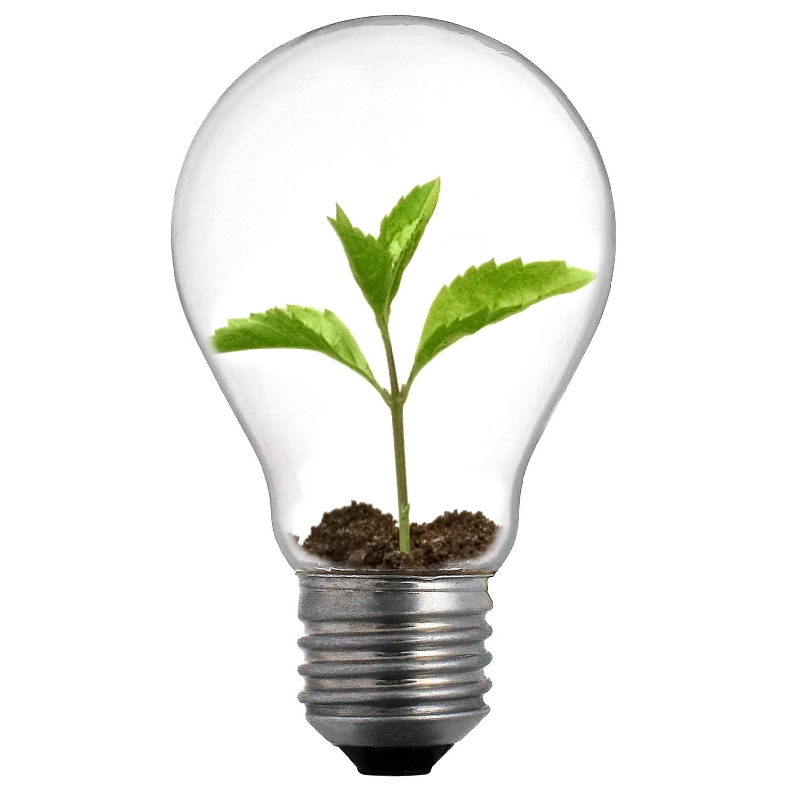 eco-friendly-bulbs.jpg