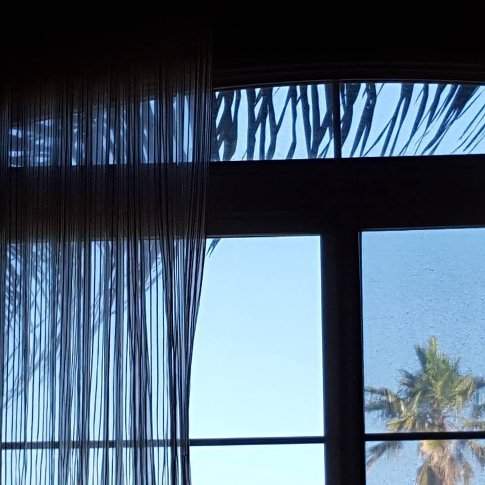 "January 26, after a day of rest and before heading to  Yarning for You : "" Good morning! Every time I wake up and look out this window, I can't help but think this palm frond looks like eye lashes. Am I peeping out a giraffe's eye?"""