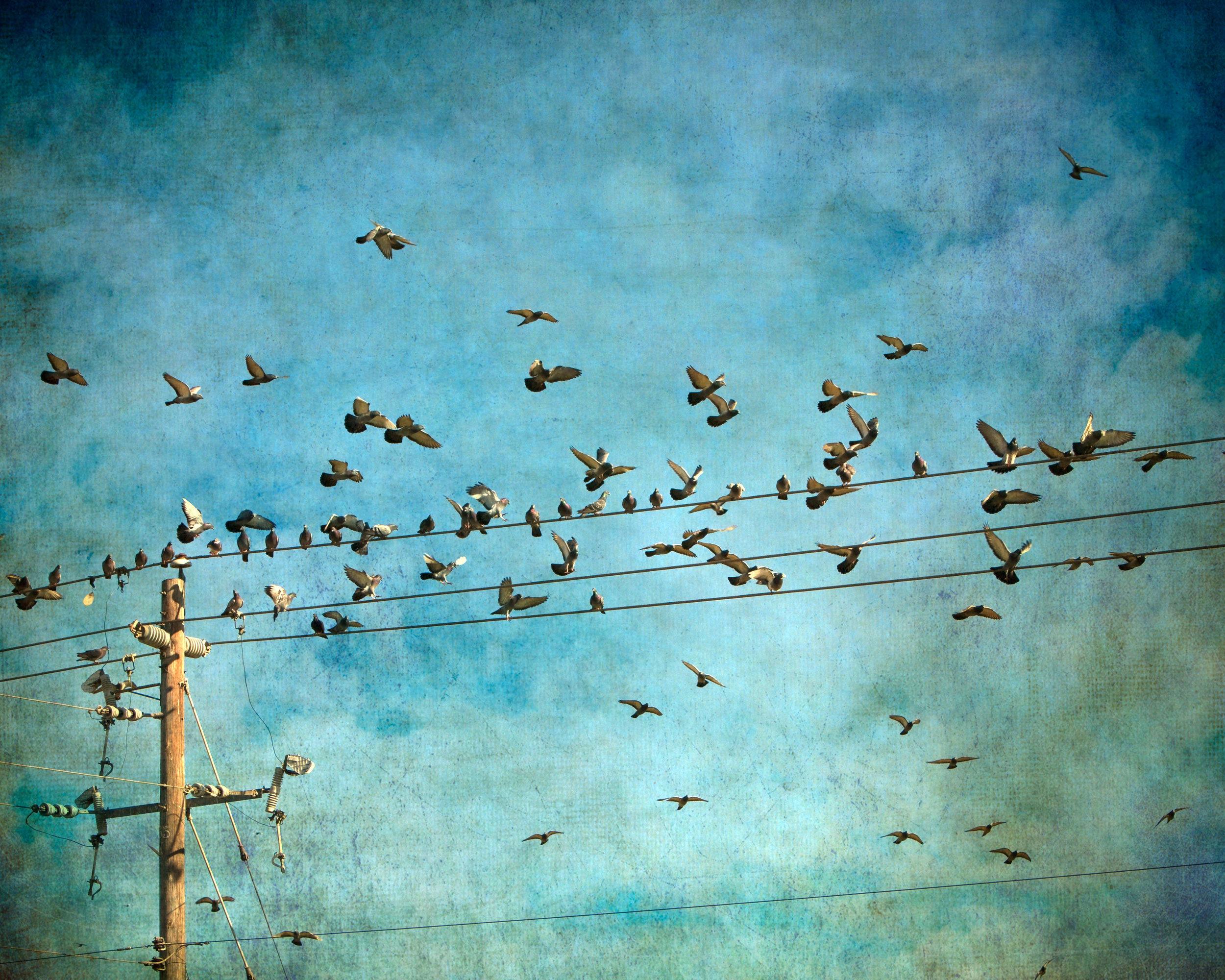 beginning-birds-4x5r-3154.jpg