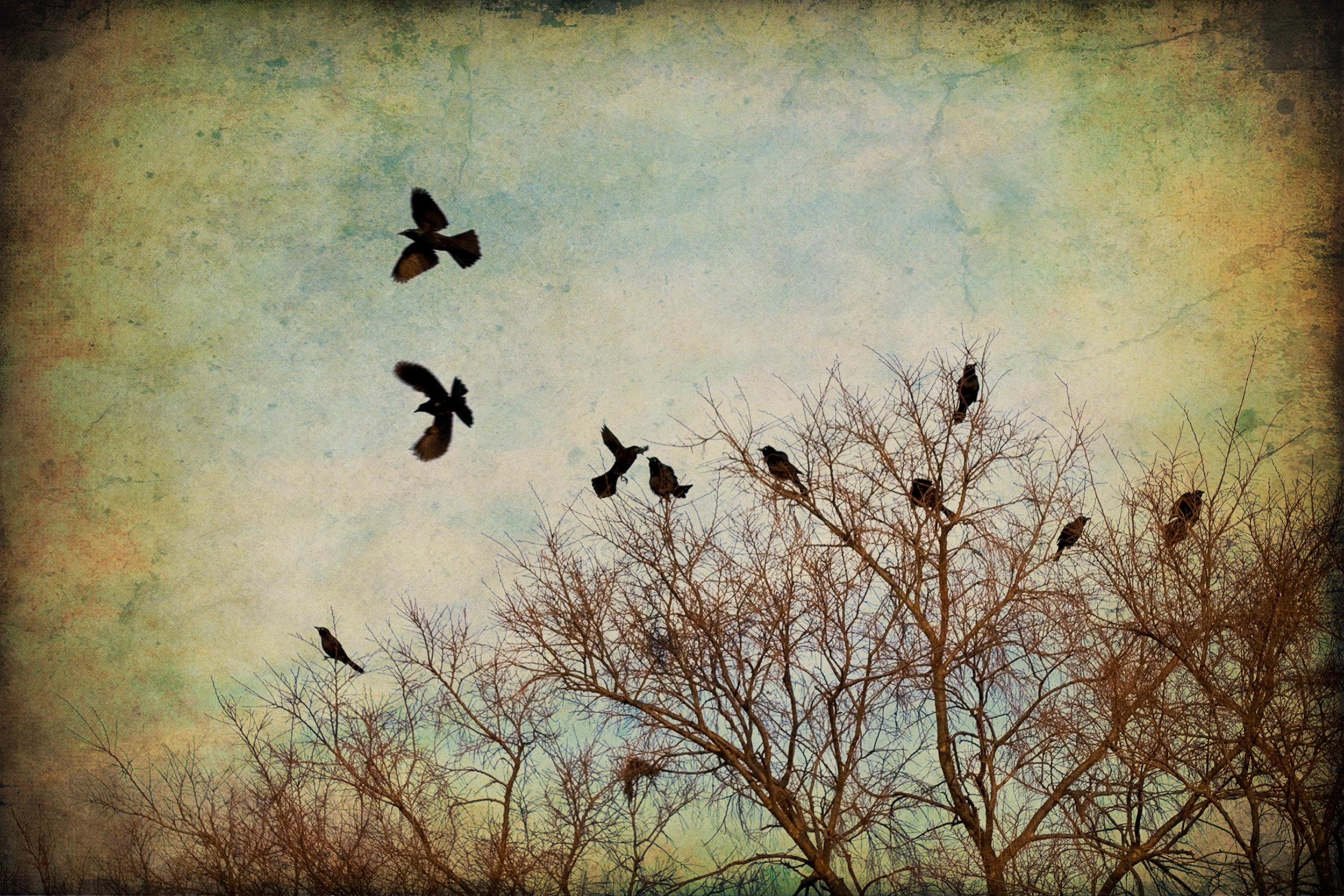 away-birds-2x3r-9580.jpg
