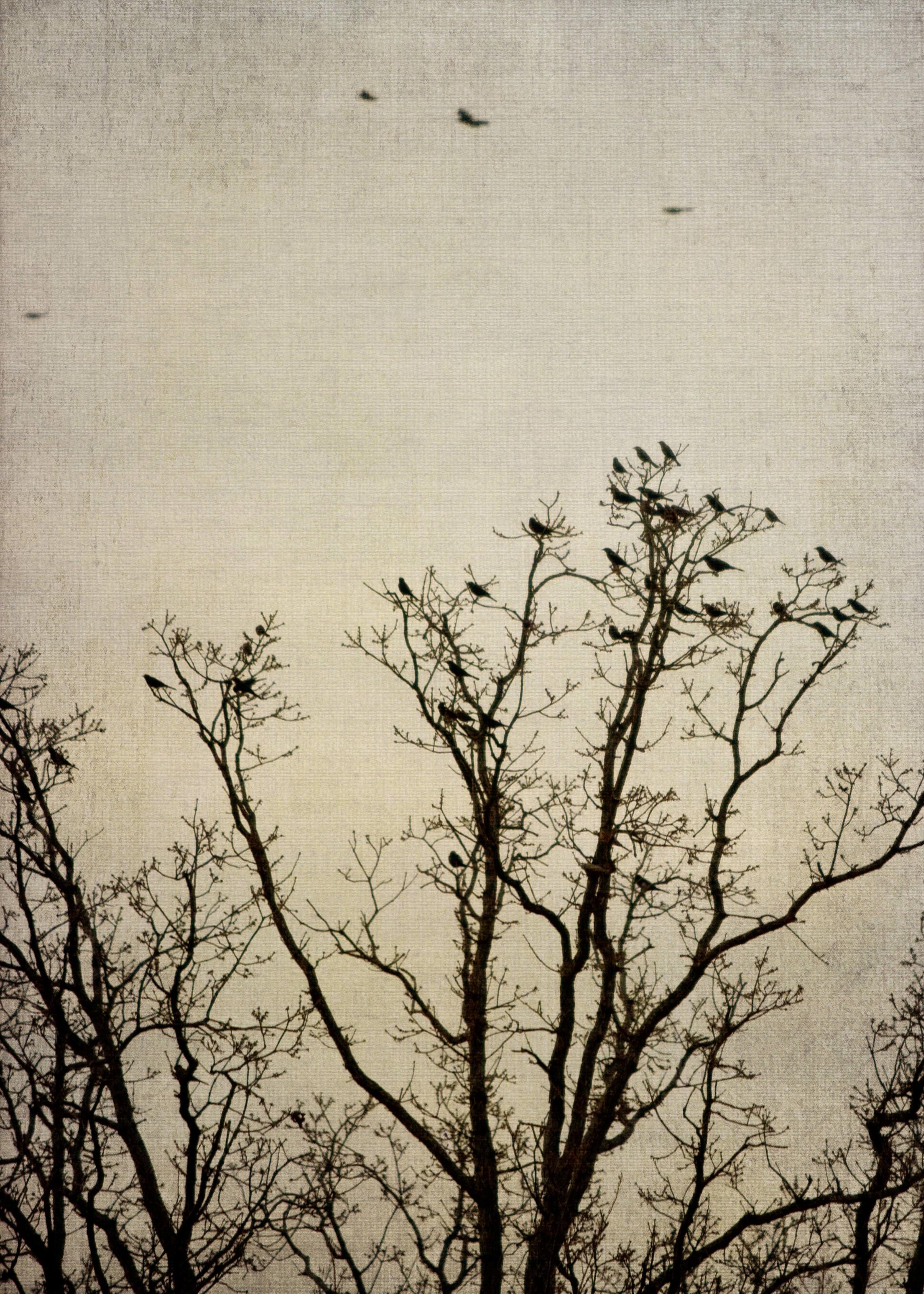 birds_at_dusk_04-7x5-7091.jpg