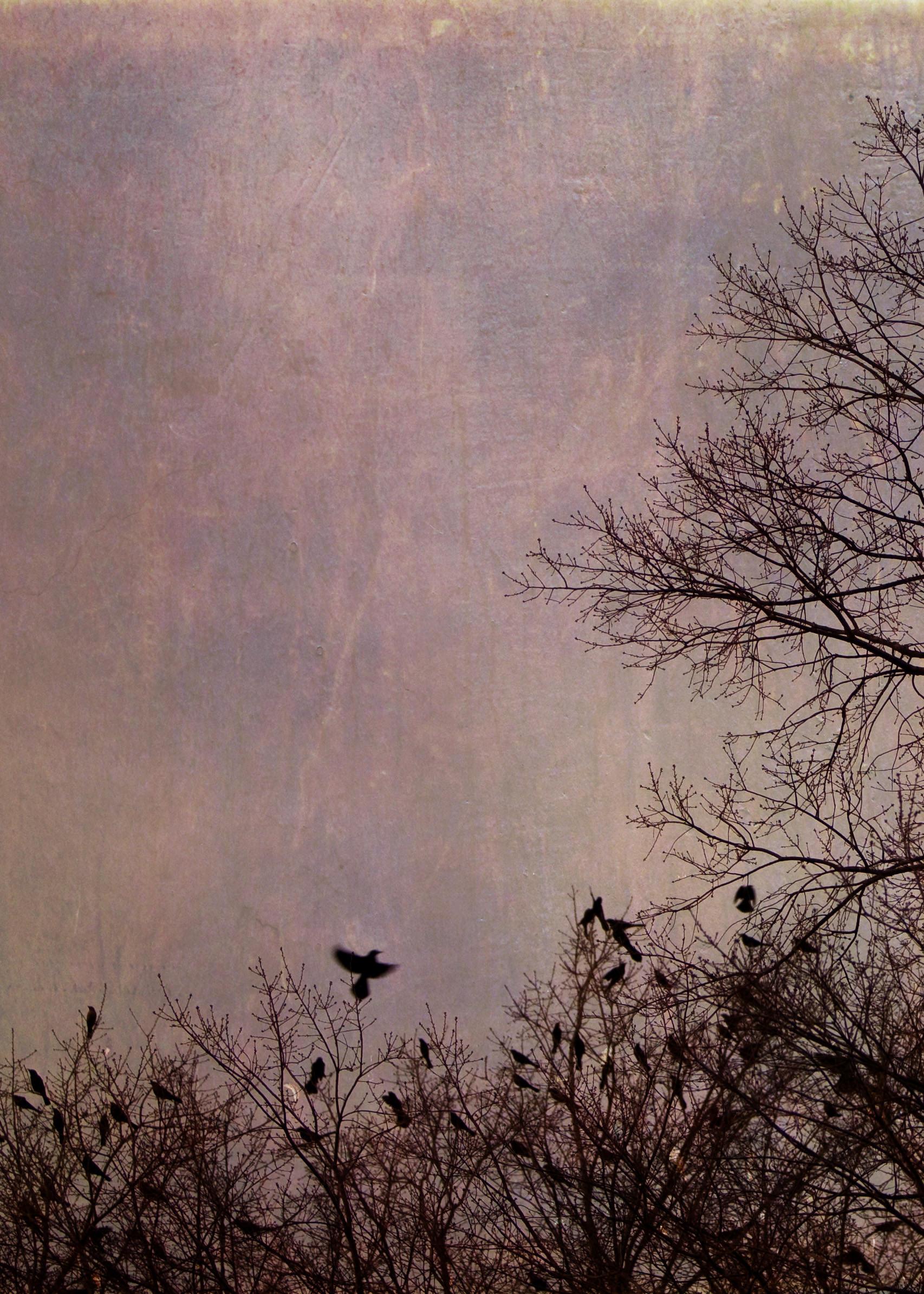 birds_at_dusk_08-7x5-7202.jpg