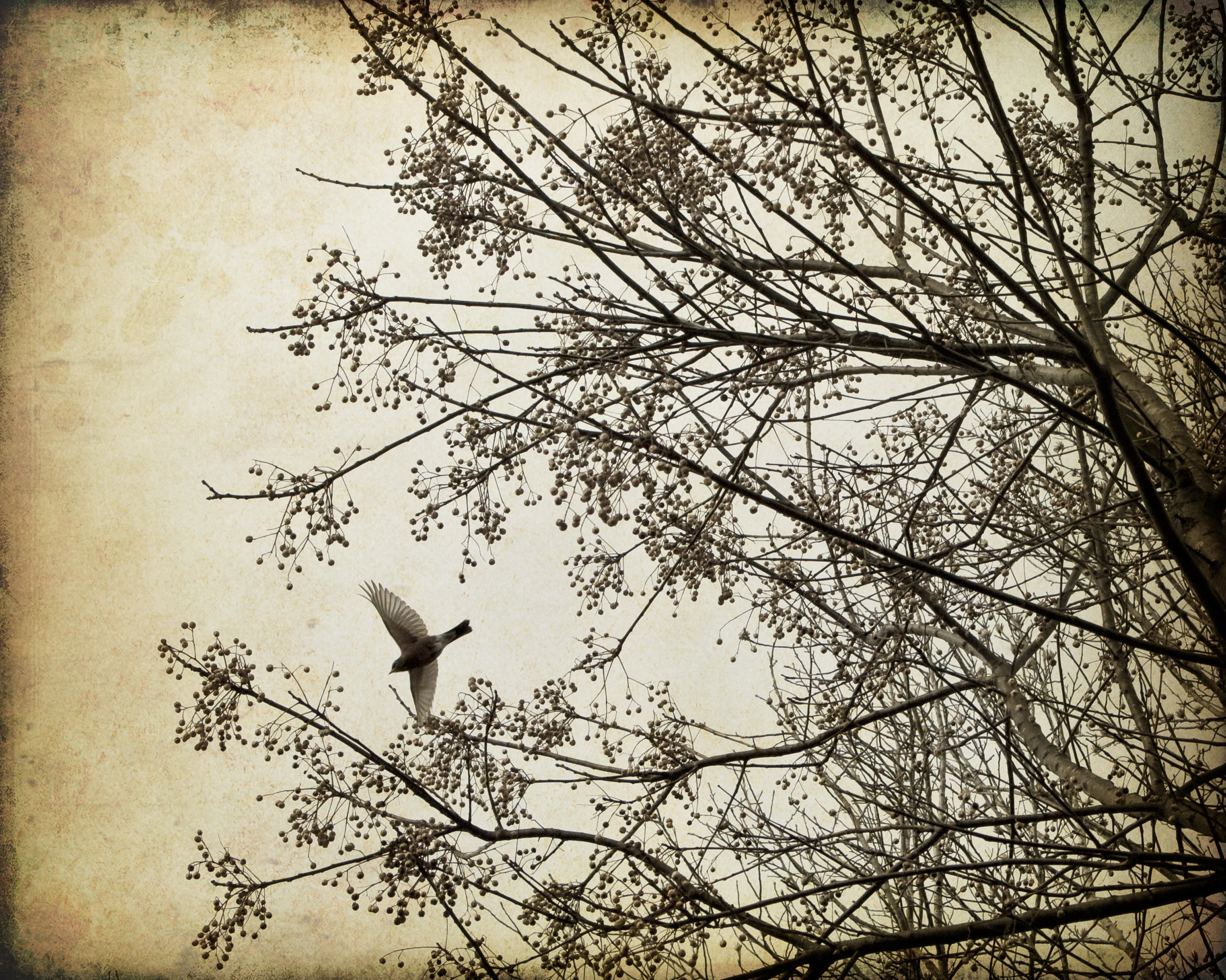 ease-birds-4x5r-3454.jpg