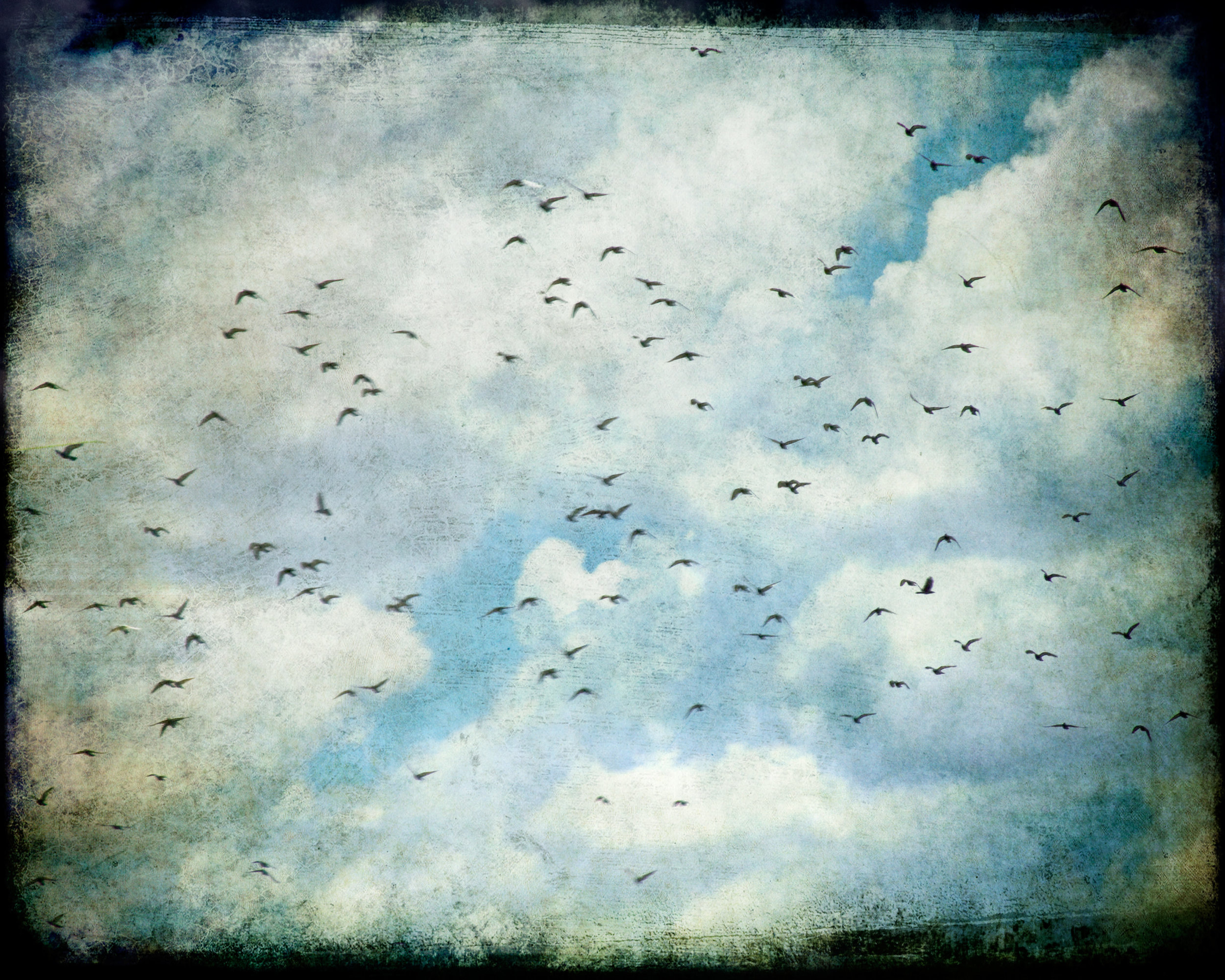flight-birds-4x5r-1094.jpg