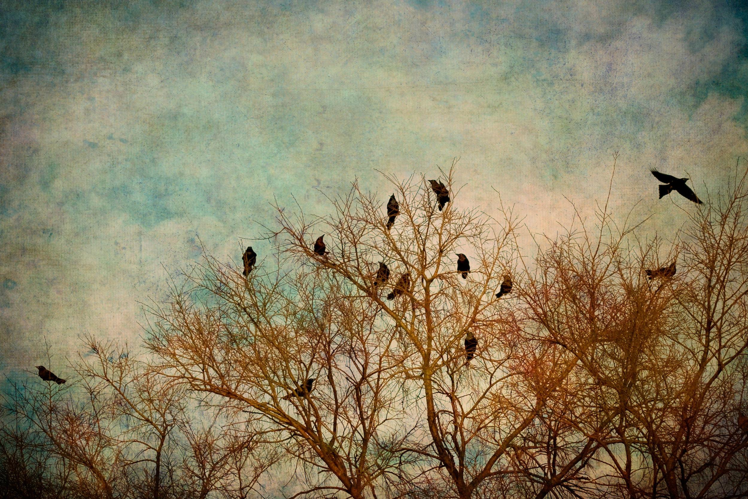 pause-birds-2x3r-9586.jpg
