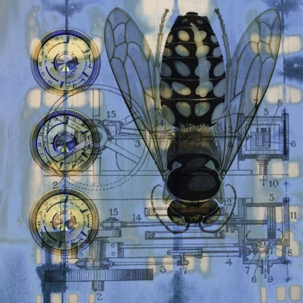 mckellar_insect_02.jpg