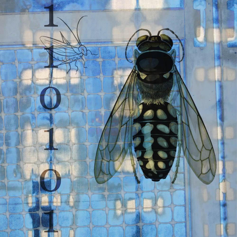mckellar_insect_03.jpg