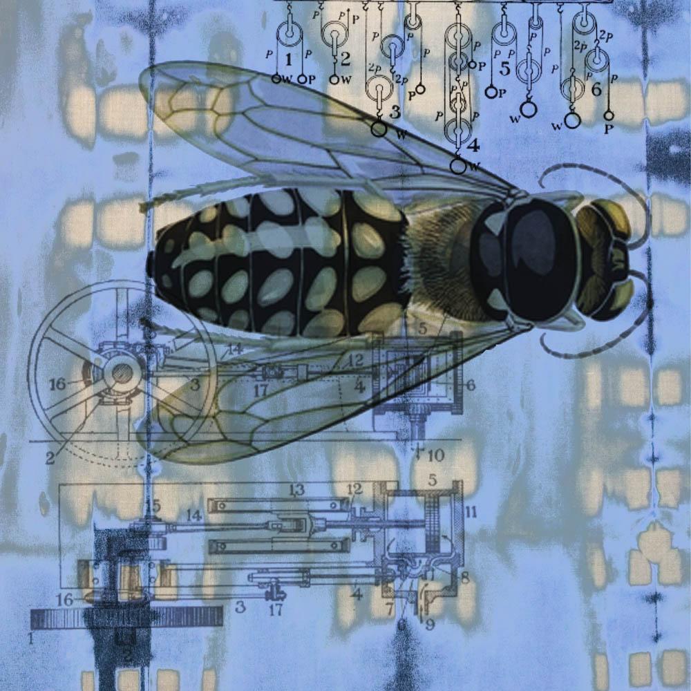 mckellar_insect_04.jpg