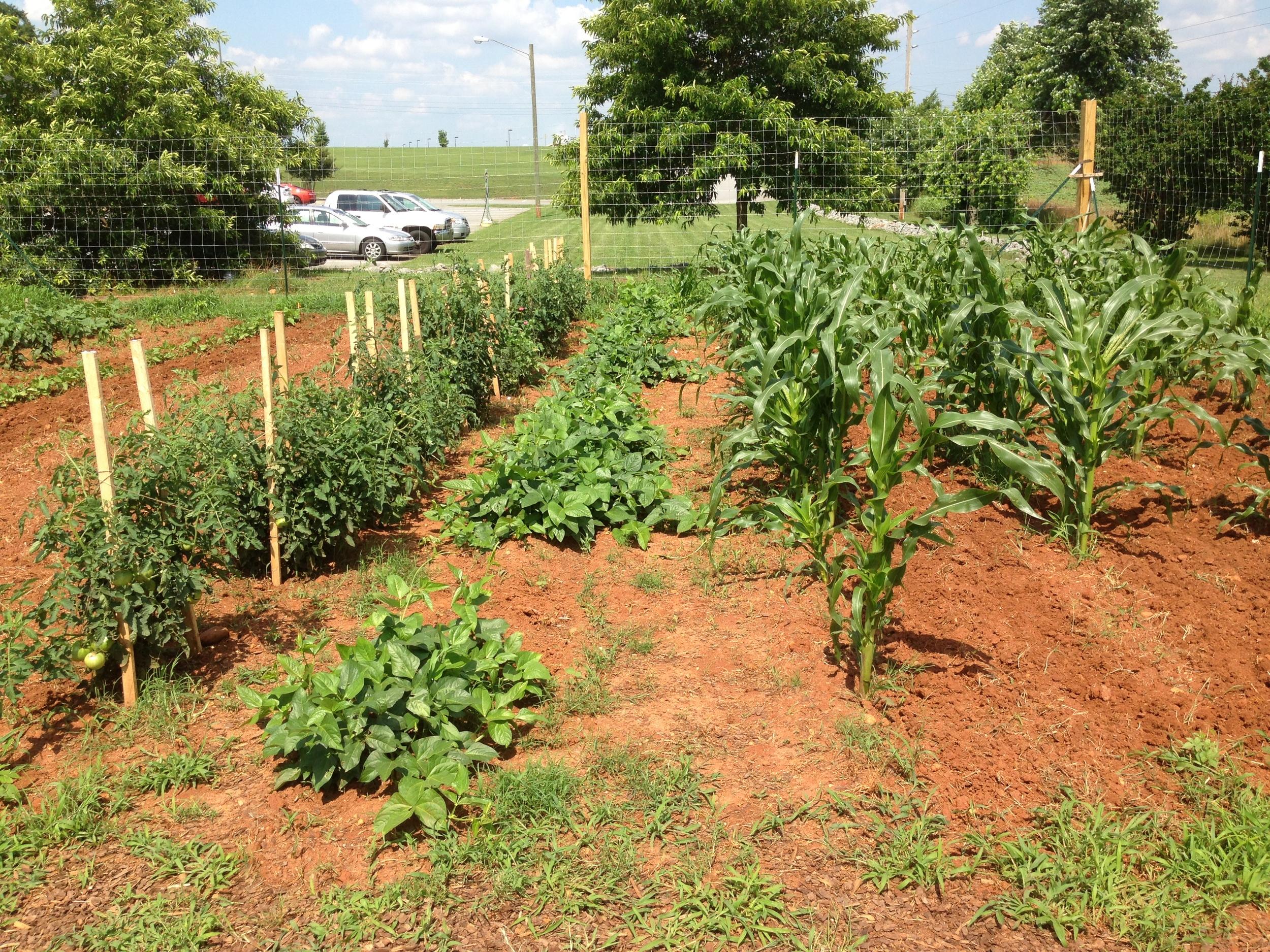 2013 'Seeds of Hope' Community Garden.JPG