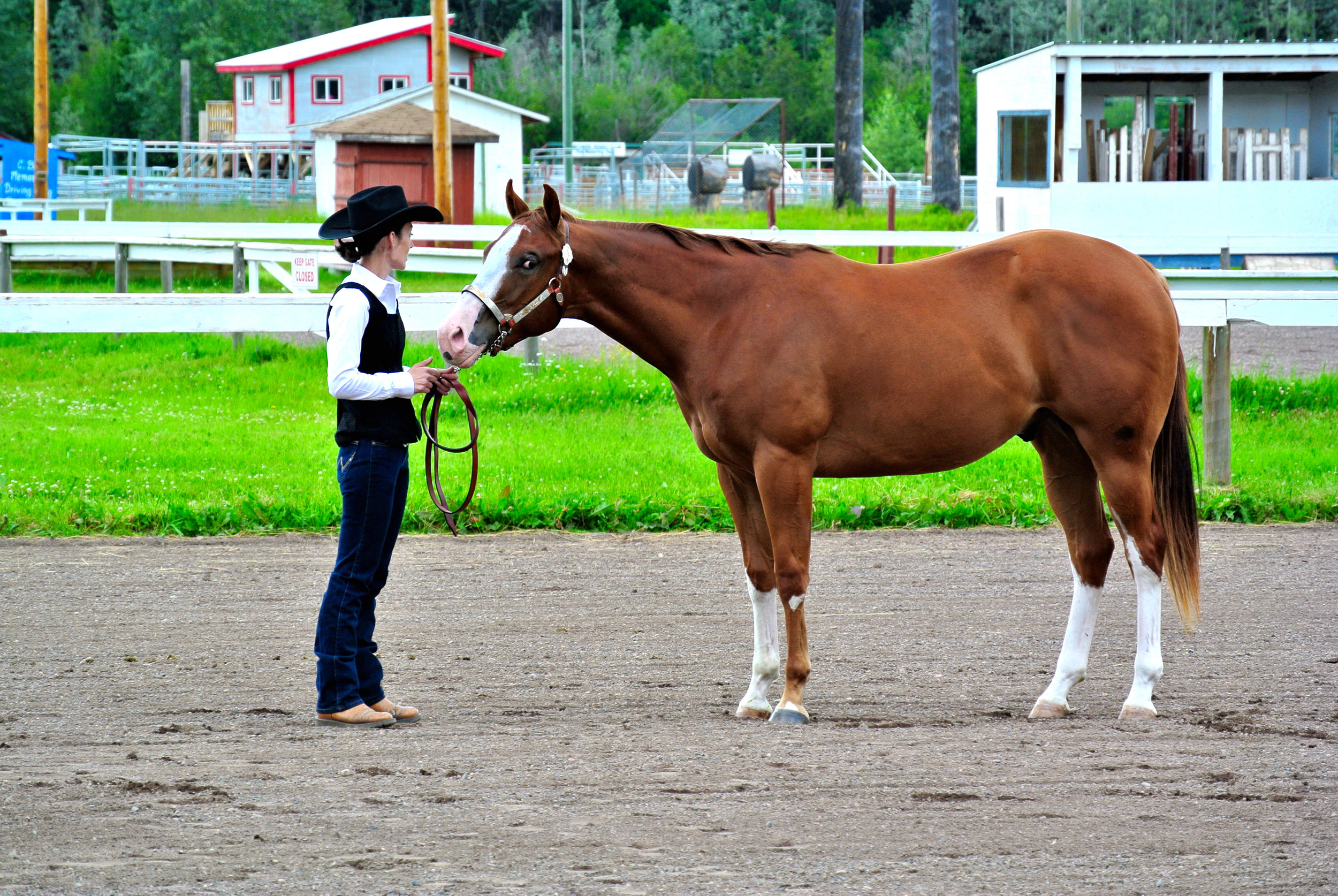 SACRED PAGE - 2011 APHA GELDING