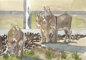 Miniature Donkeys  by Susan Hausmann