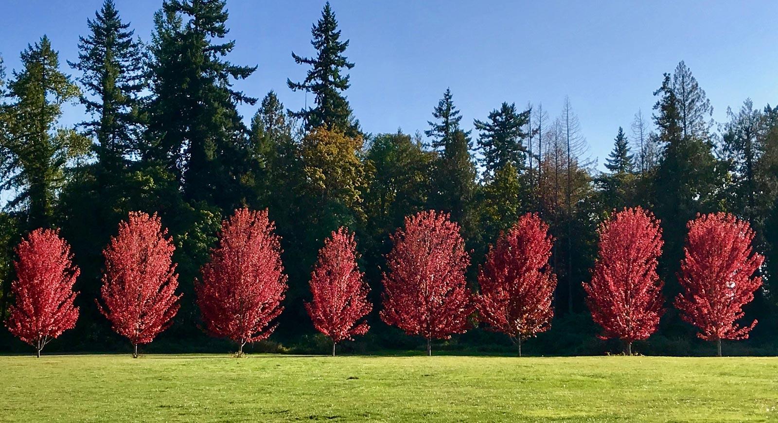 the-grove-slideshow-autumn-trees.jpg