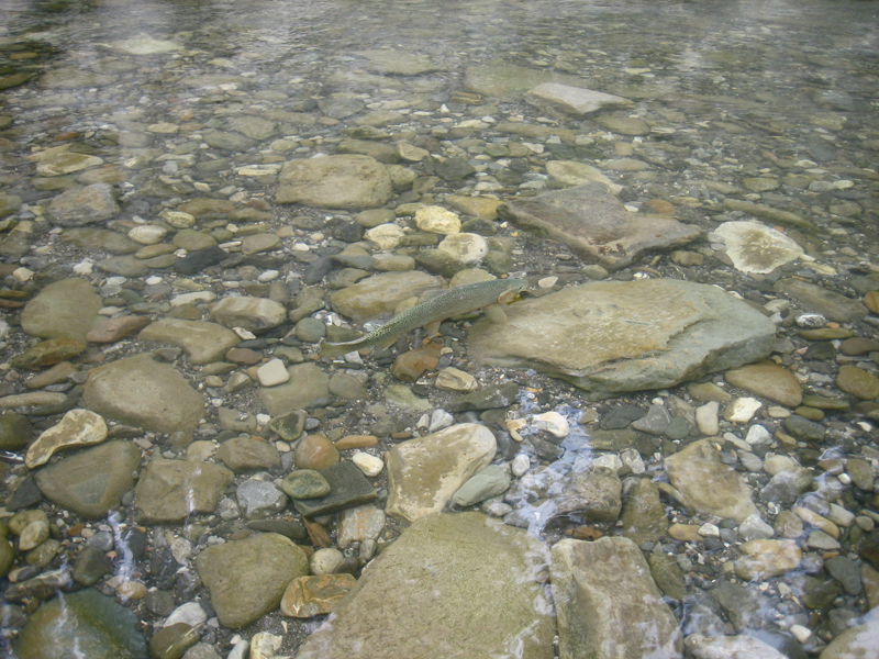 BASIN_Environmental_2012_044.JPG