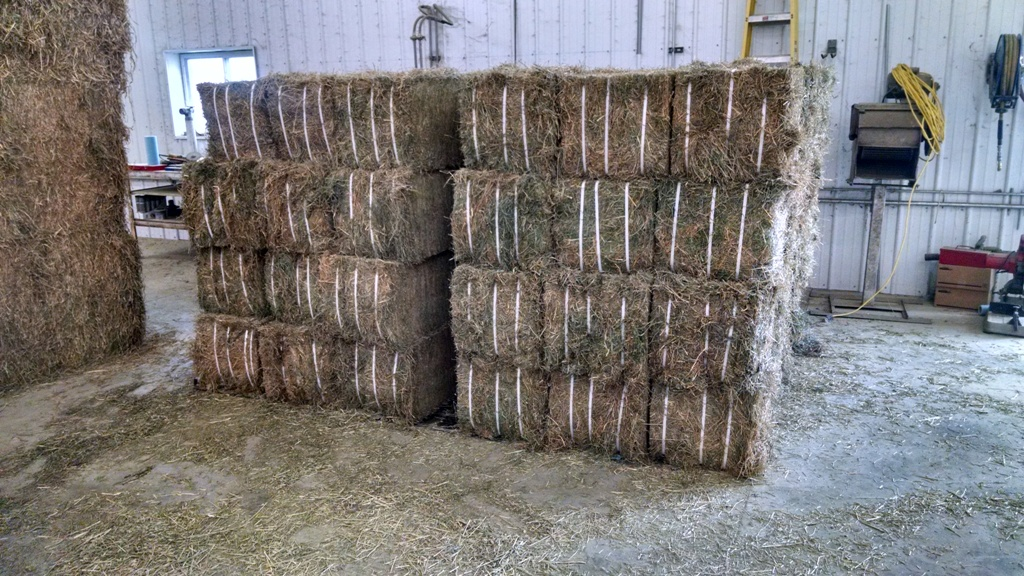 Cut Bales of Alfalfa Orchardgrass and Fescue Ready to Load