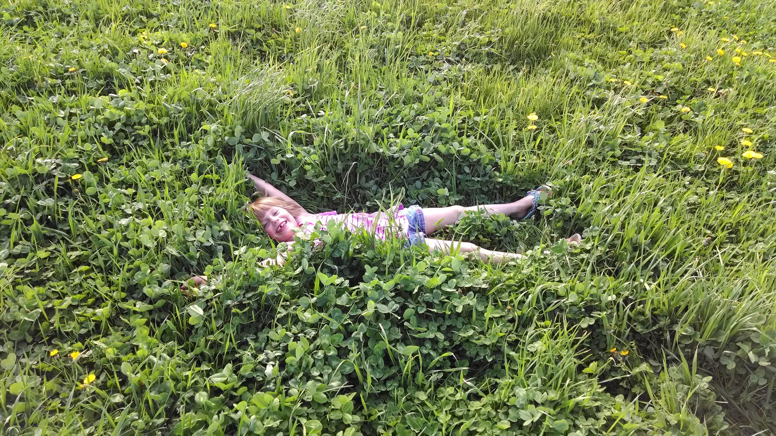 Gallant Red Clover and Profit Orchardgrass Making a Great Bed.jpg