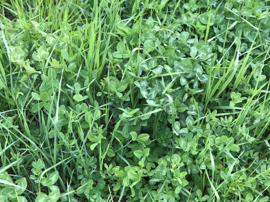 Enduro Plus Premium Pasture Mix.JPG