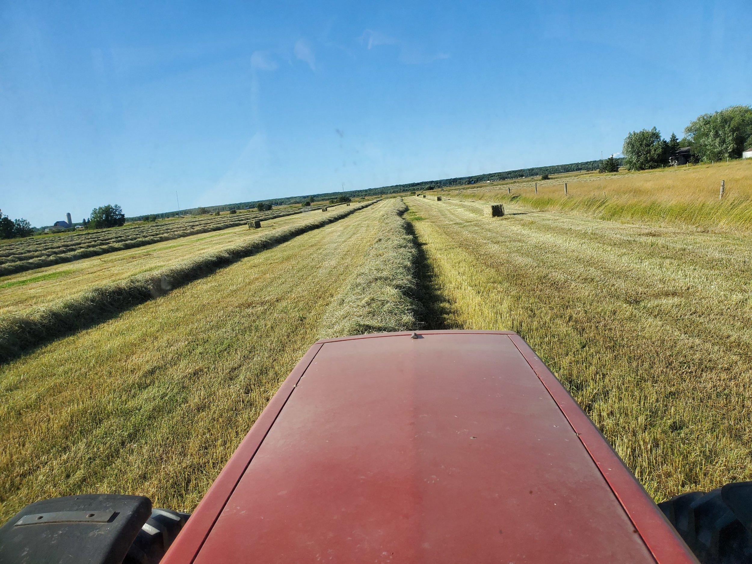 2019.8.21 - Sweeten making hay.jpg
