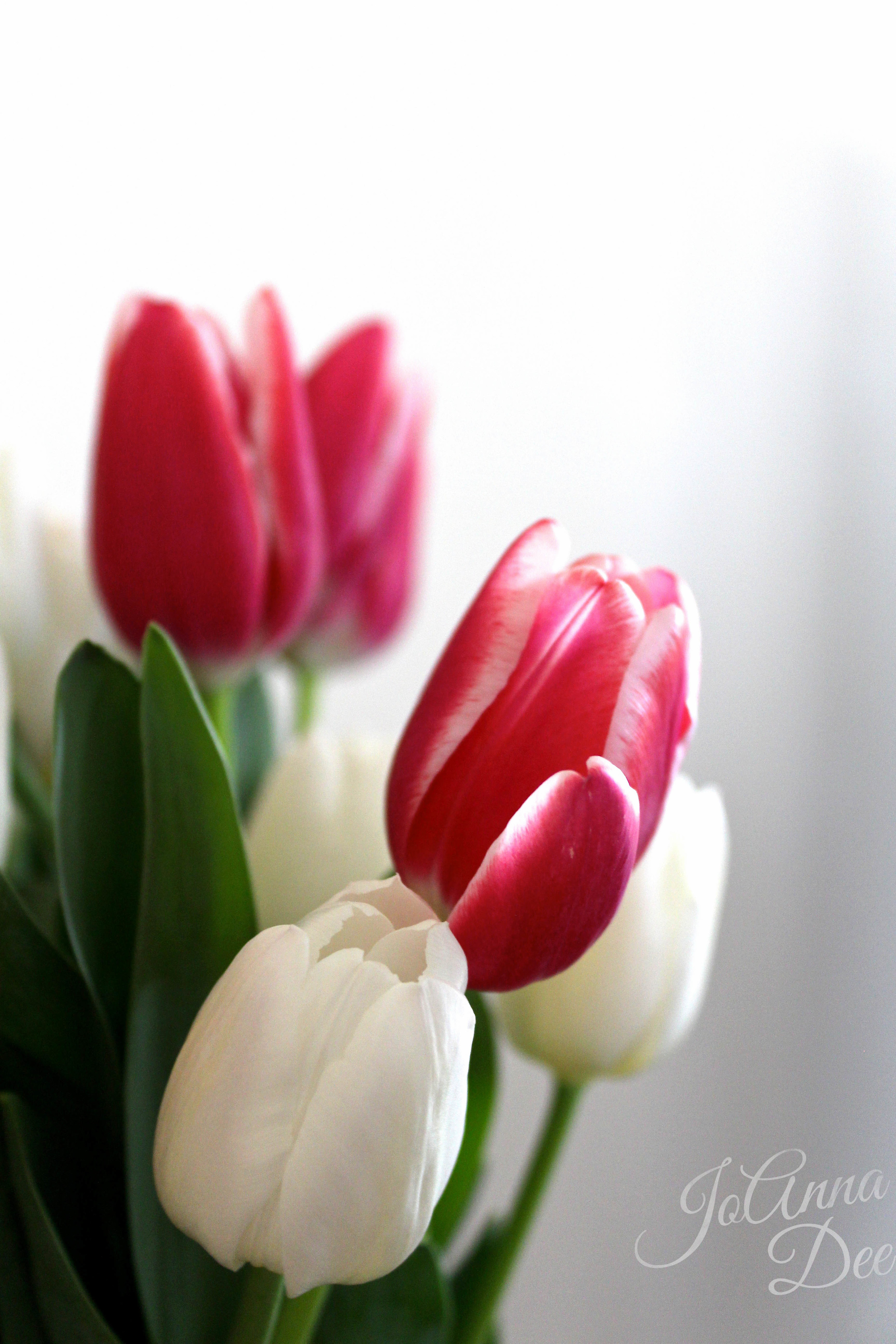 Pink Tulips Sweet Love Bridal Shower | JoAnna Dee Weddings
