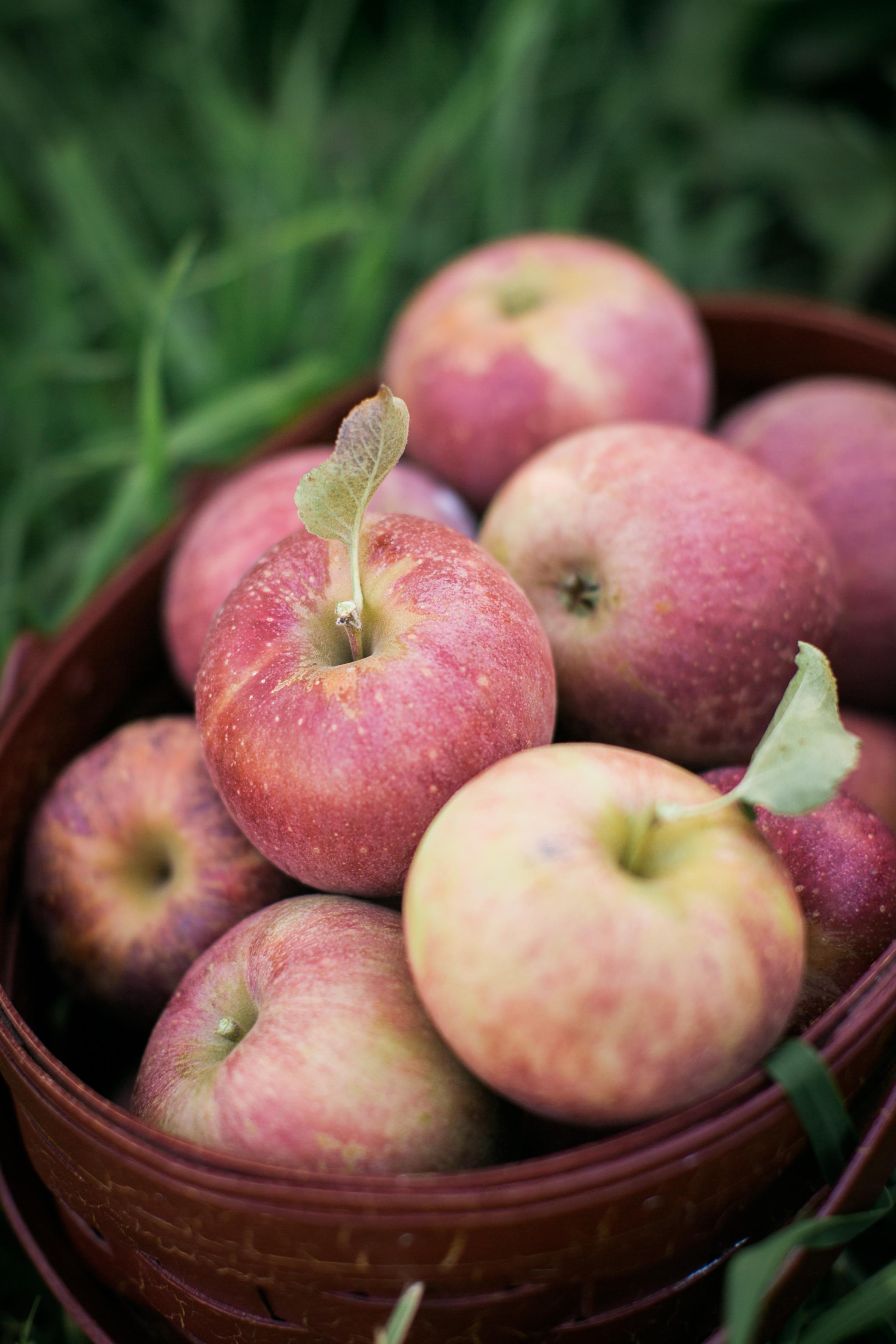 Autumn, My Autumn... {Pedantic Foodie}