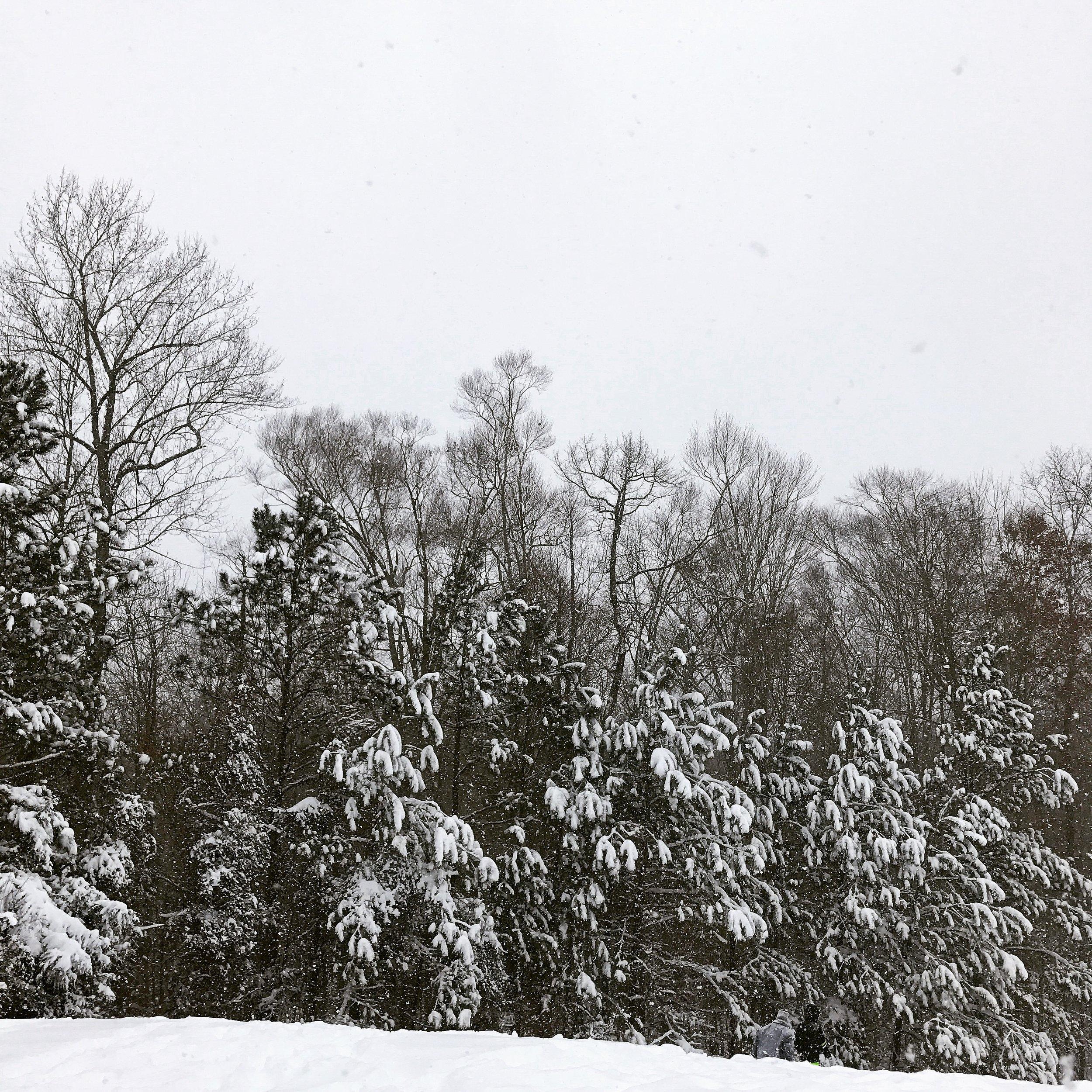 Snow Day {Pedantic Foodie}