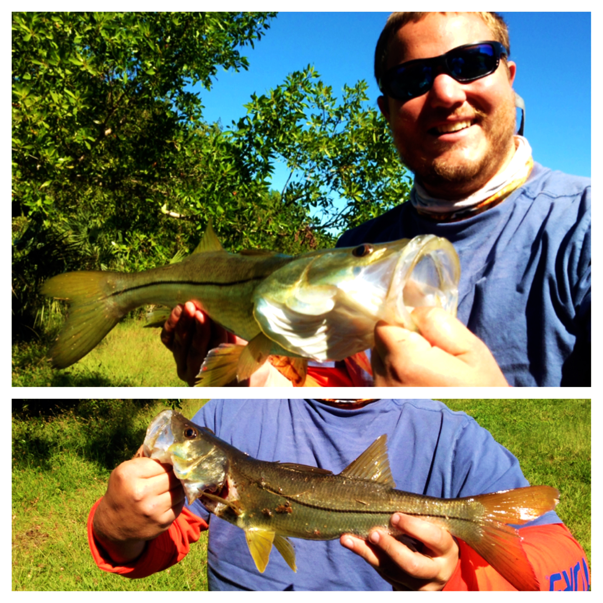 Trey's snook in the Everglades