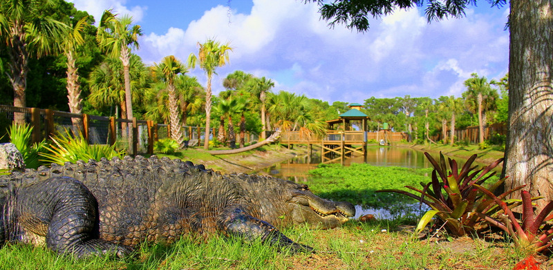 Wild Florida Alligator Tour with Airboats in Orlando Florida