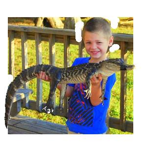 Alligator Experience