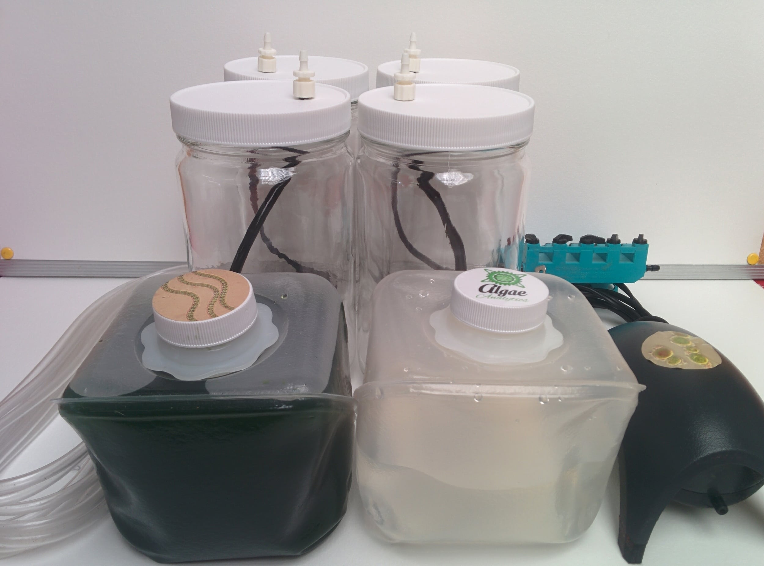 Algae growing kit including 4 bioreactors, algae culture and medium.