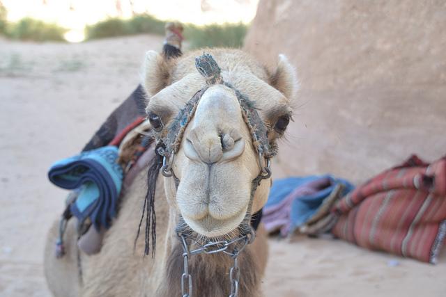CamelBlueBag.jpg