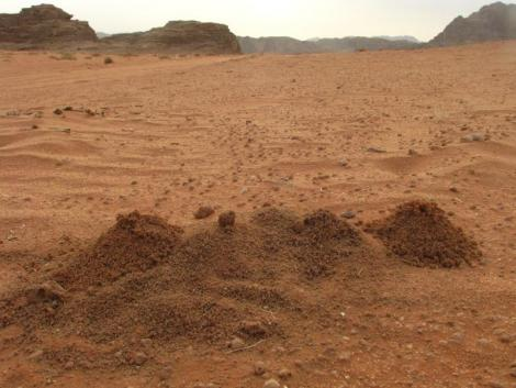 Insect House - Wadi Rum