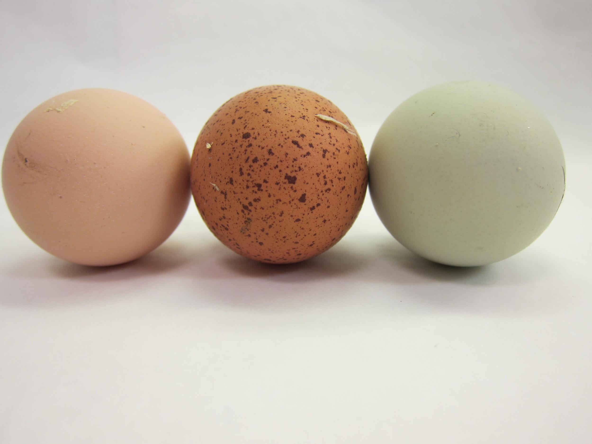 our own farm fresh eggs.