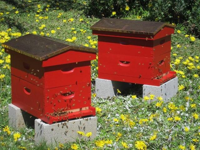 mendocino beekeepers