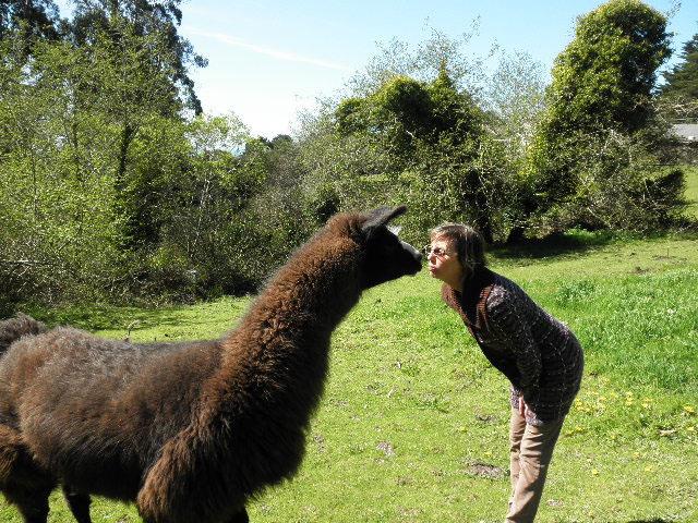 llama kiss2.jpg