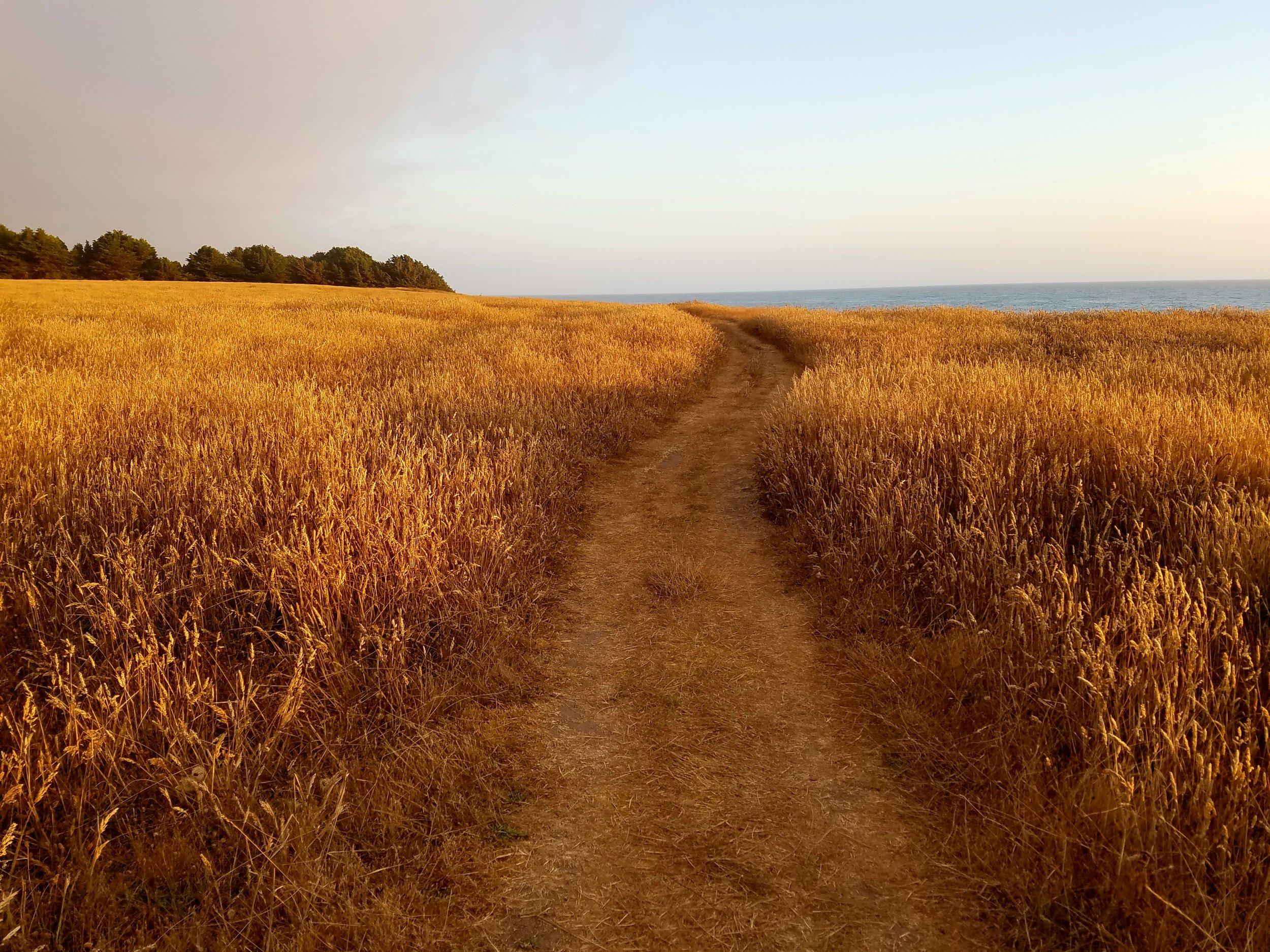 golden walk.jpg