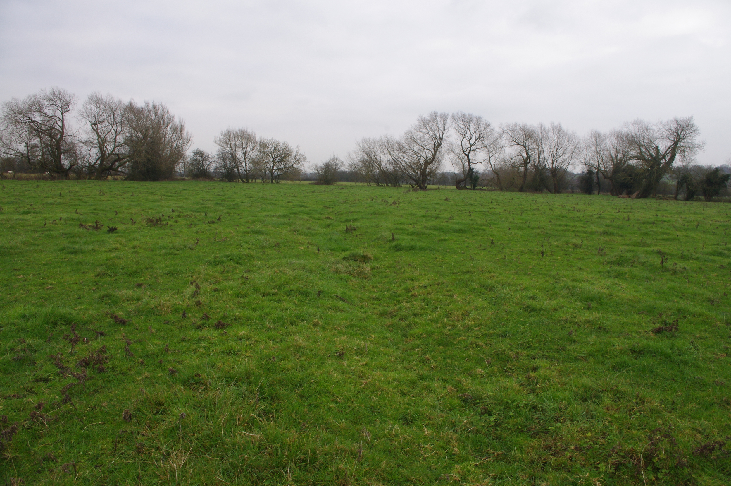 Remnant tail -drain, part of the surviving water meadow system at The Willows