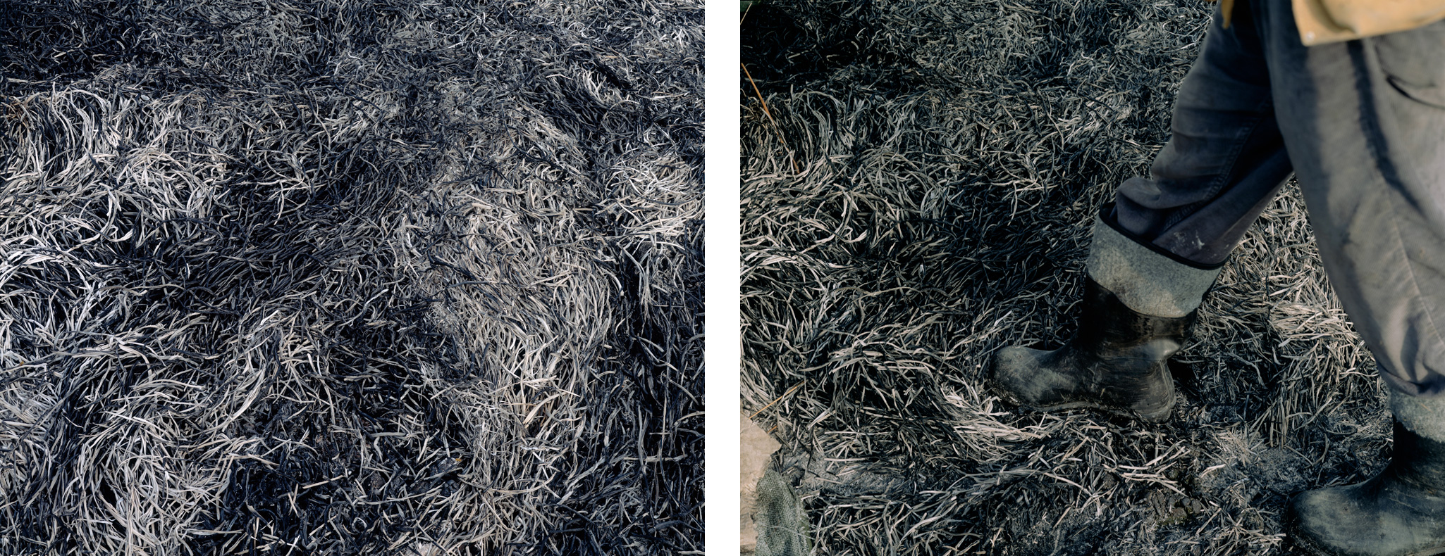 Ashes_diptych.jpg