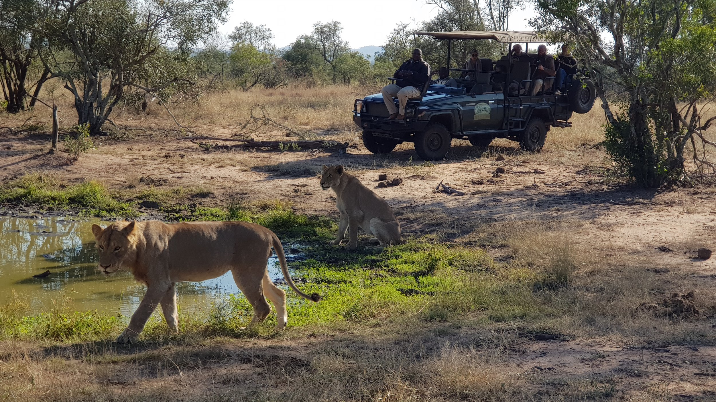 Getting close to Africa's Big Game on Safari