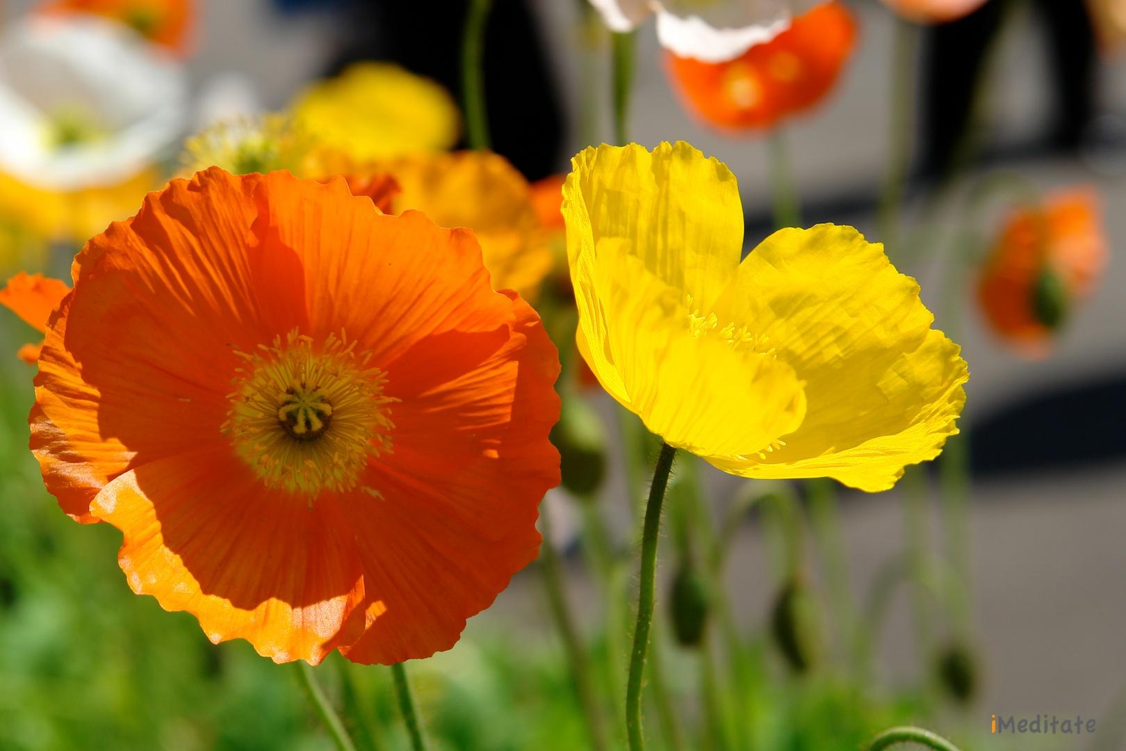 Flower Mediatation