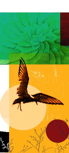 vogel revivendo.png