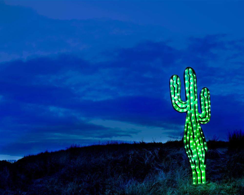 23_cactus.jpg