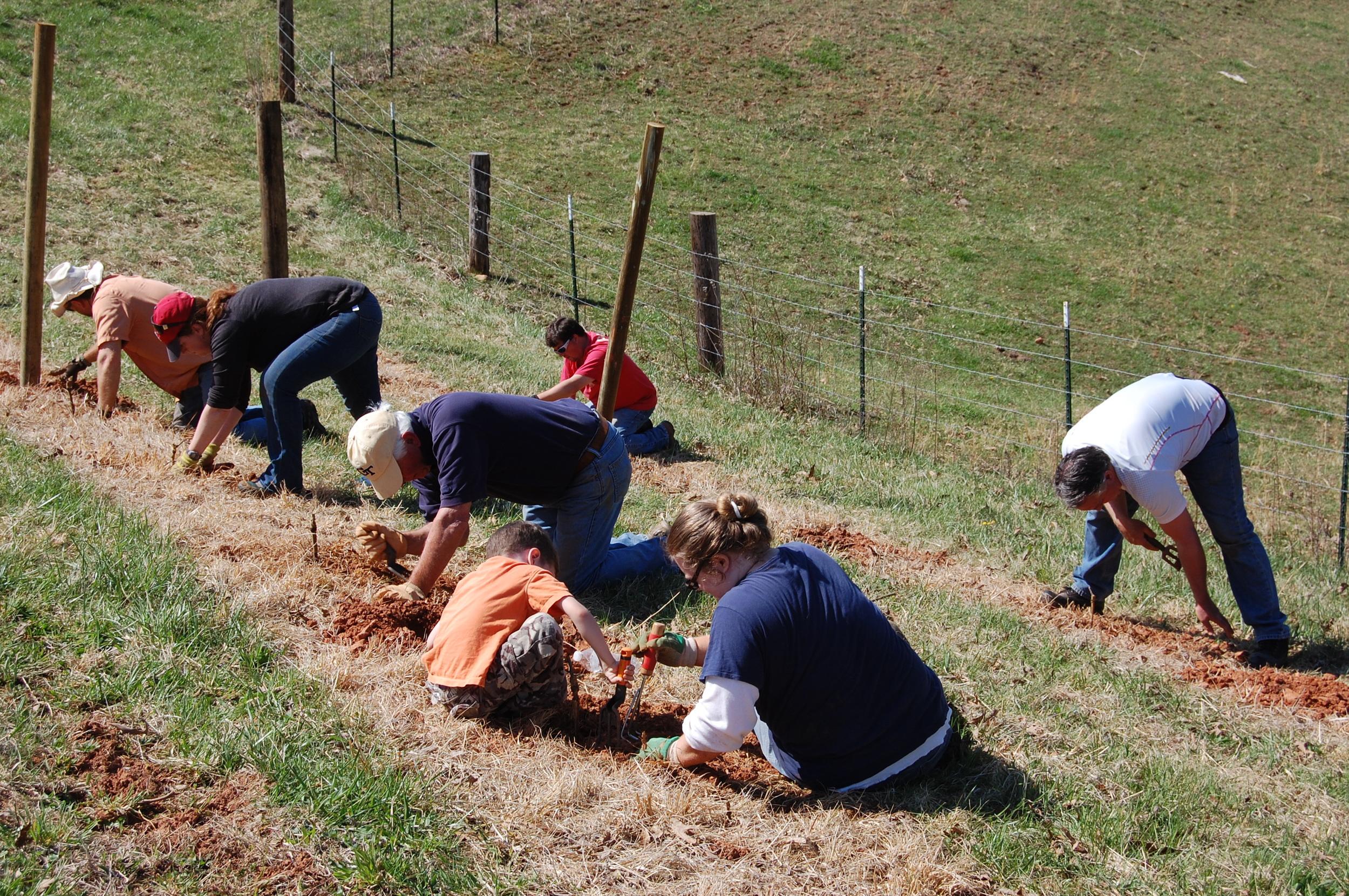 Planting the Petit Verdot, 12 April 2014