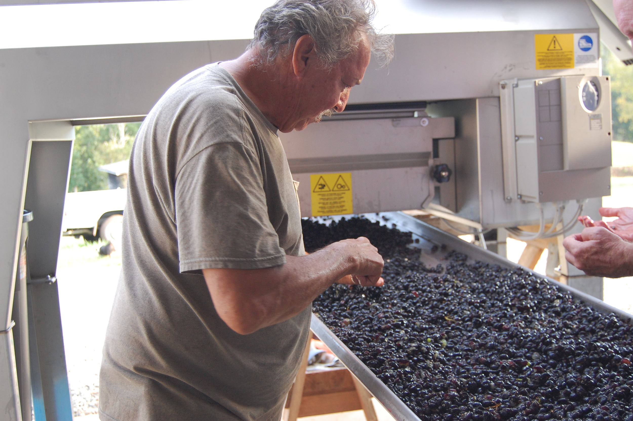 Tony, sorting crushed fruit
