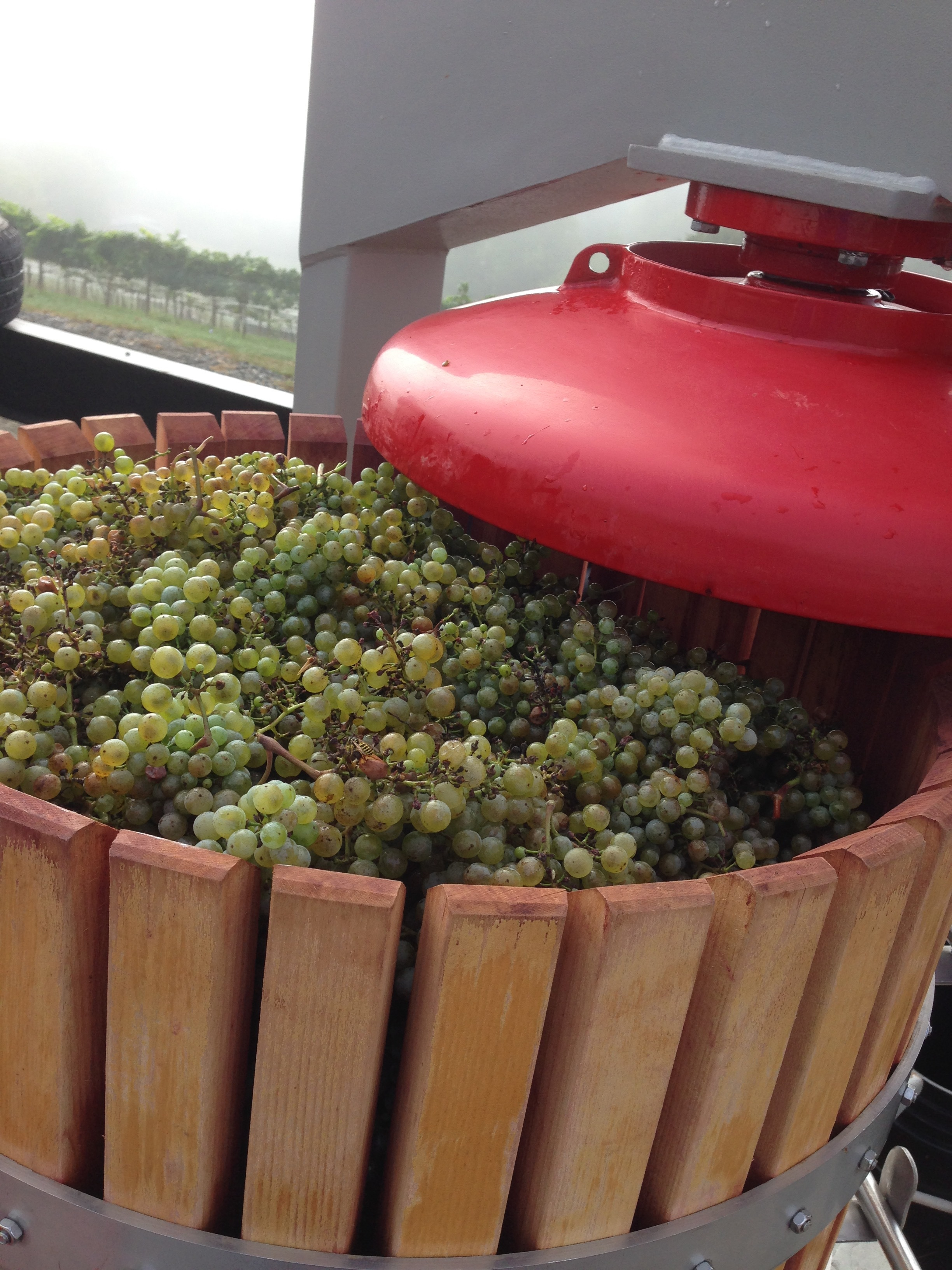 2016 Petite Manseng in the press
