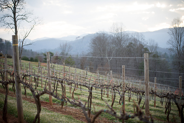 Vineyard view, 1 March 2016.
