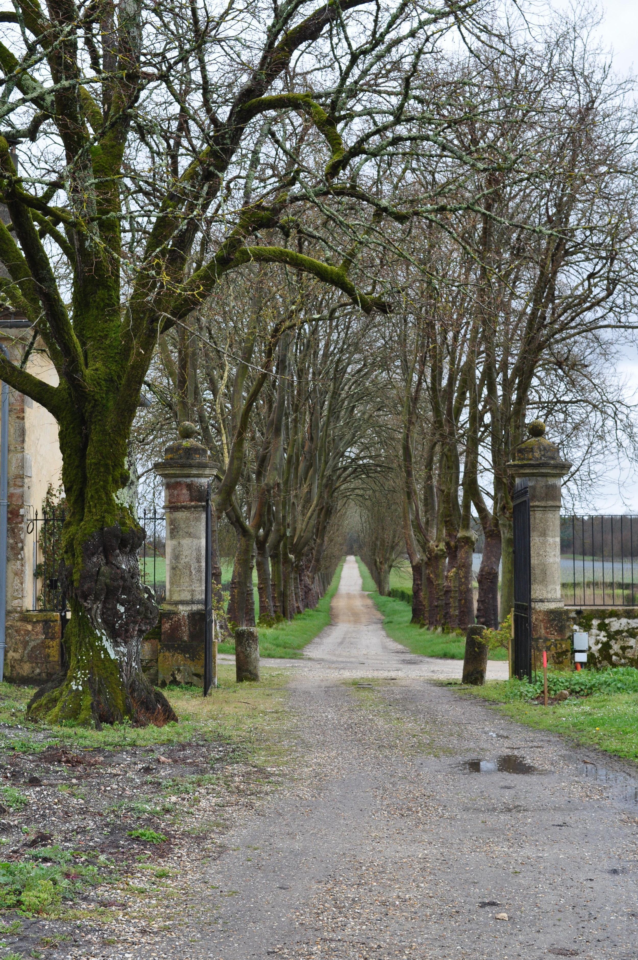 The Roman road at Chateau Guiraud