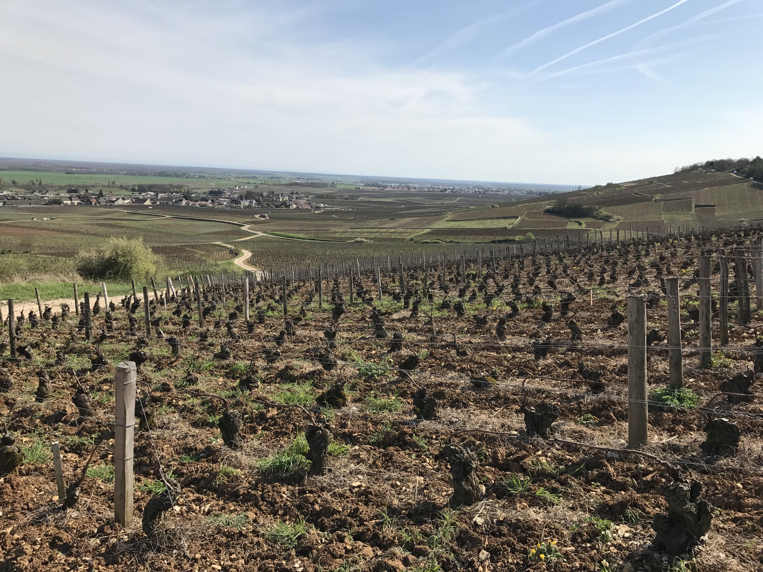The vineyards of Bourgogne