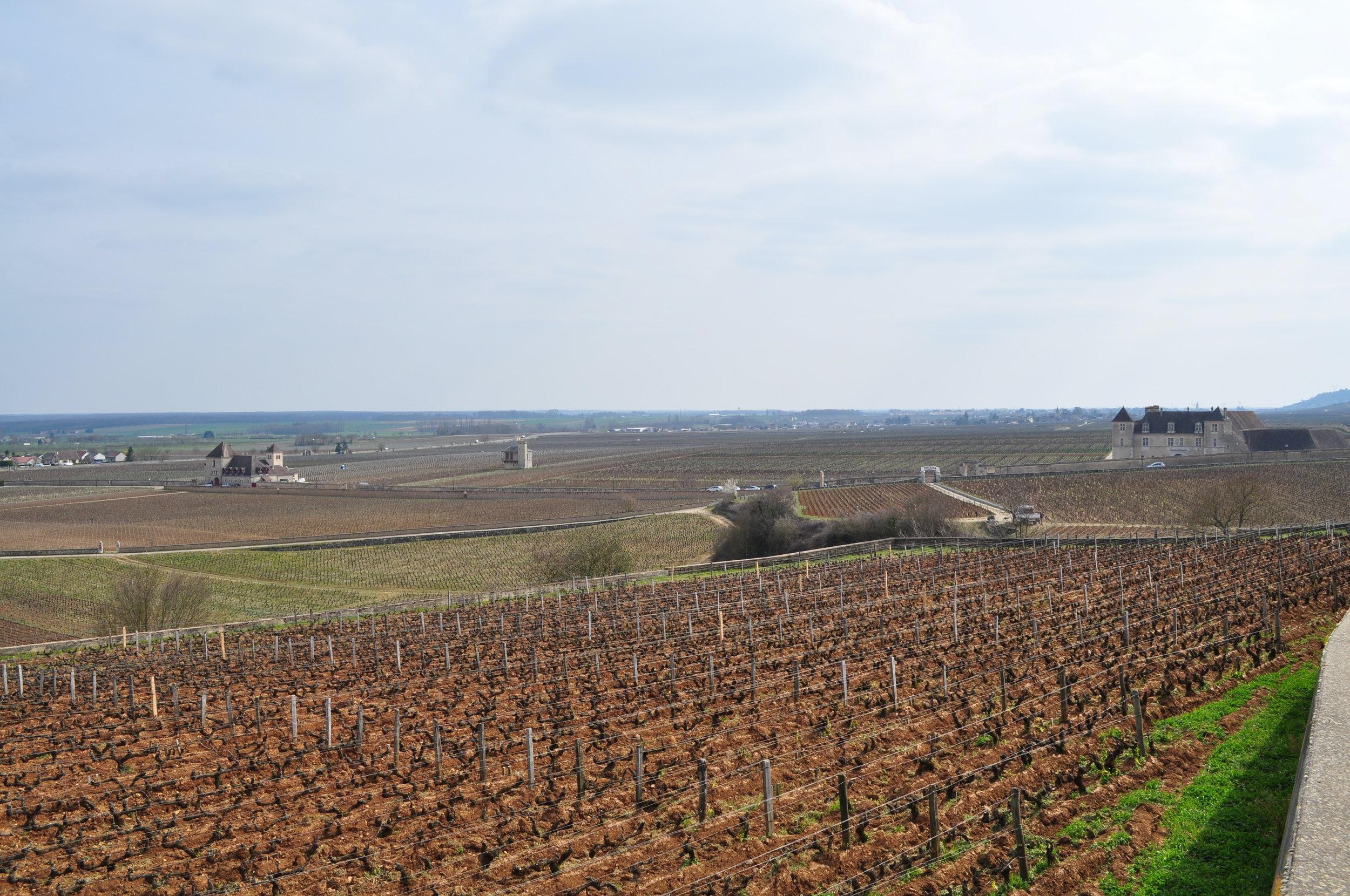 Burgundy vineyards near Chateau du Clos de Vougeot