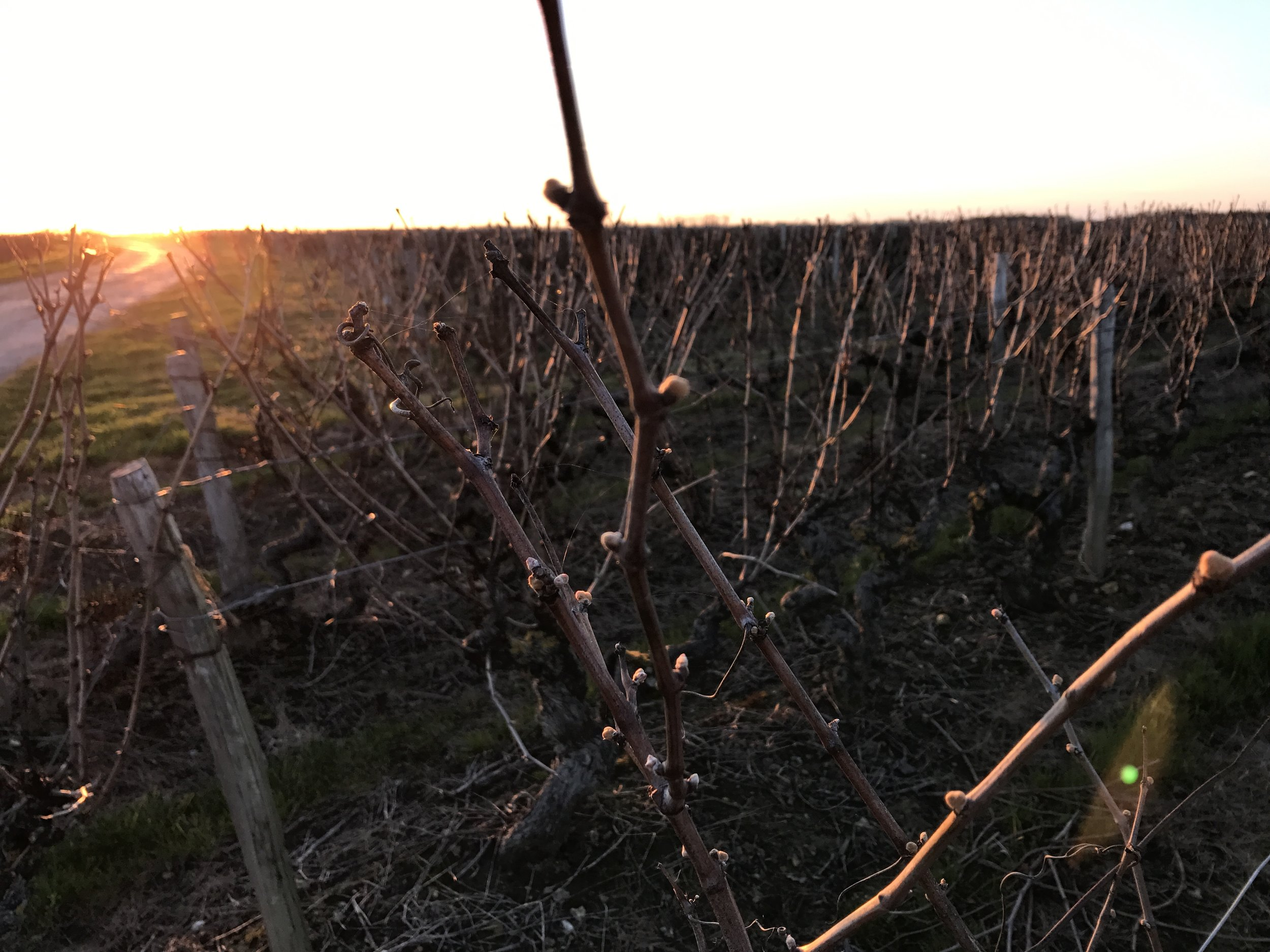 Sunset in Vouvray