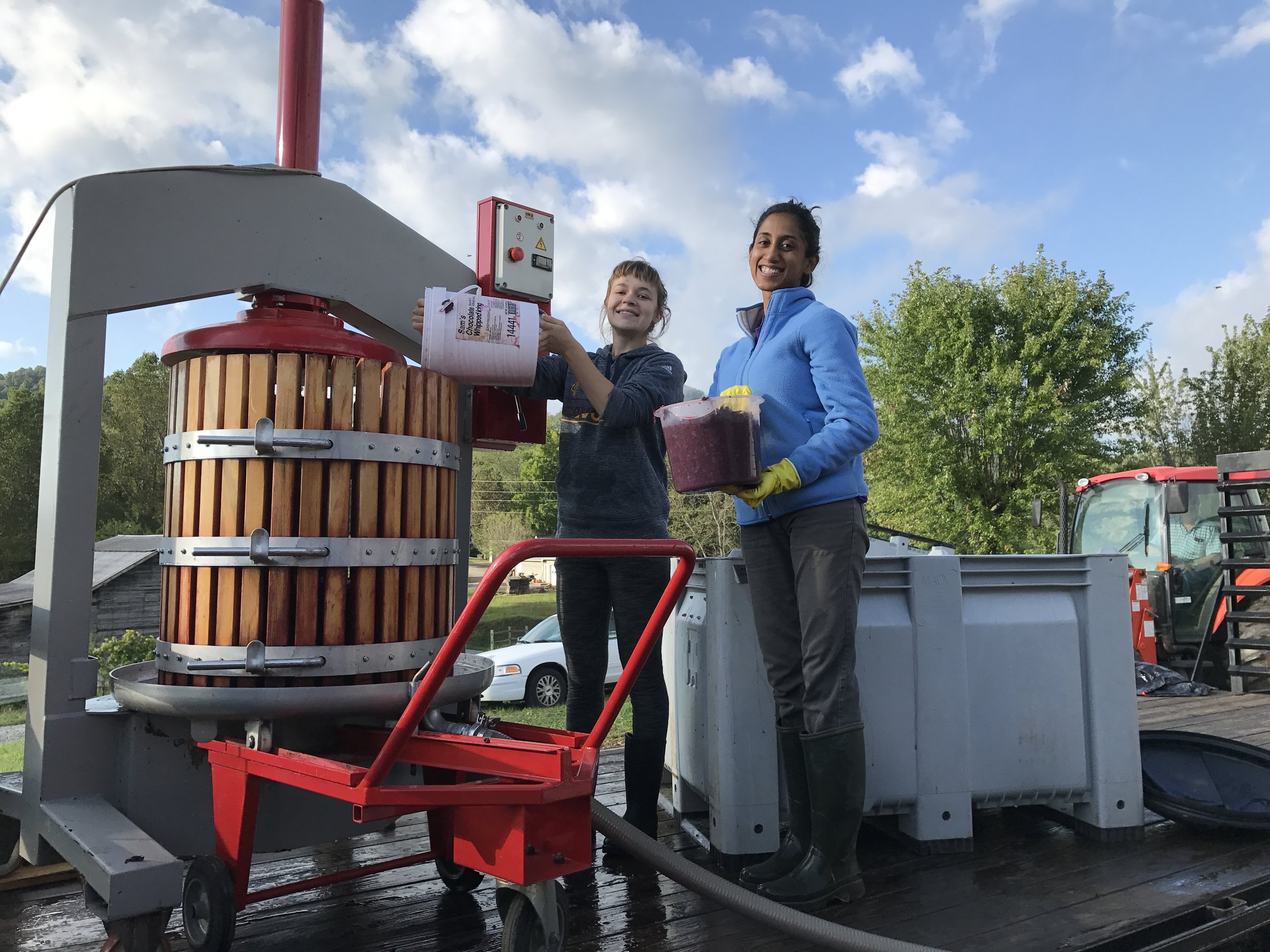 Arianna and Shruthi pressing the 2017 Sangiovese with a glimpse in the background of Eddie in the tractor moving bins
