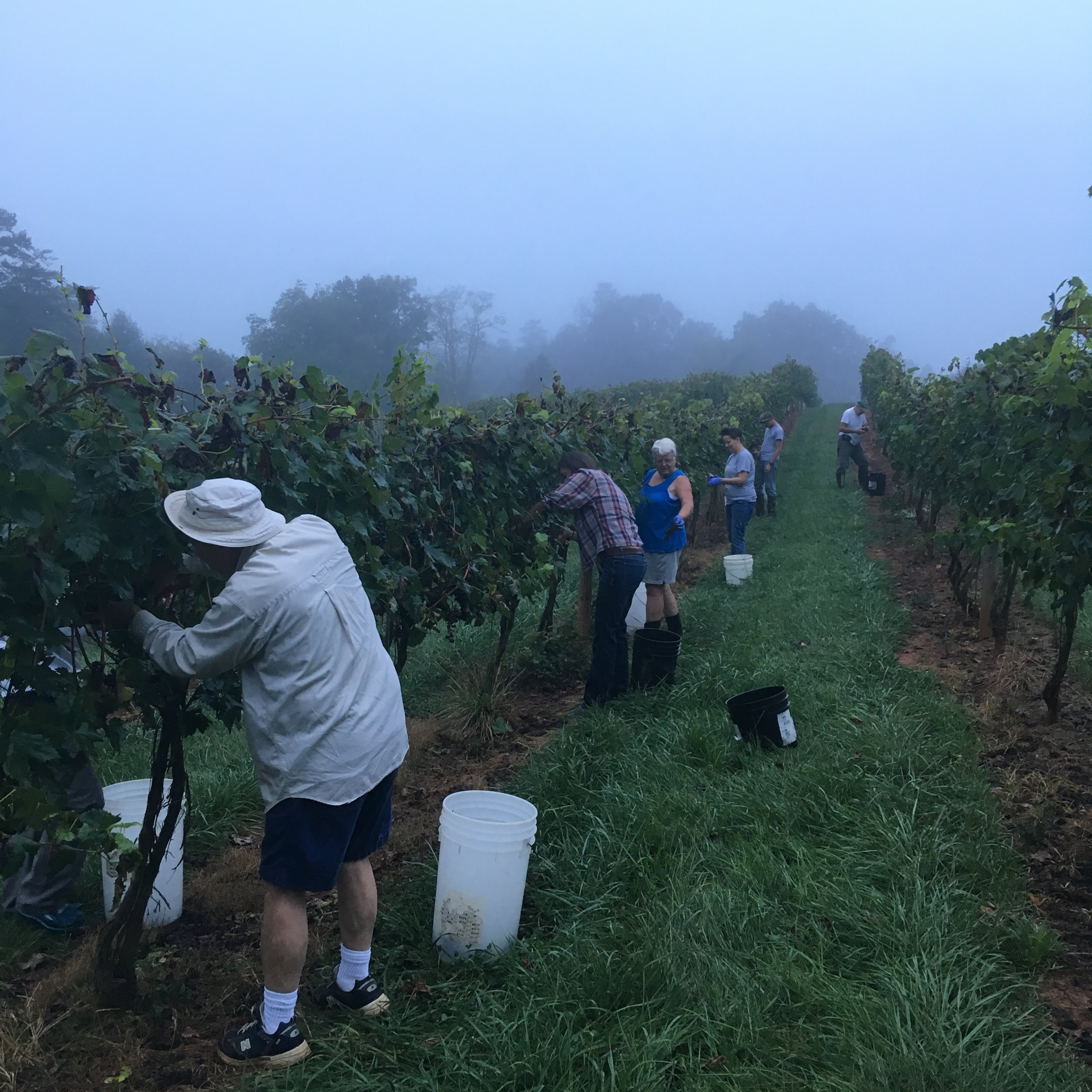 Foggy start to a harvest day